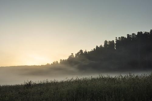 Pre-dawn Mist