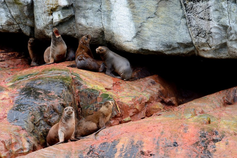 Sea lions in front of the cave