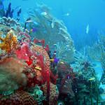 Reeffish vol1.01 (42)