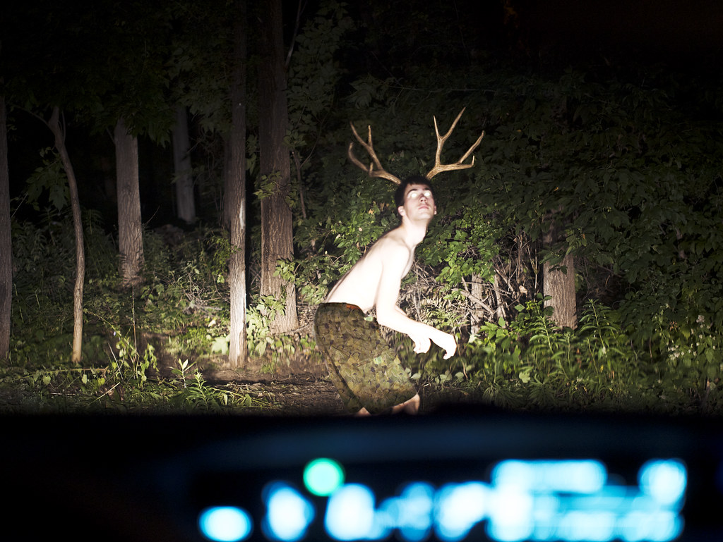 Deer In The Headlights 40 52 Wildlife I Took This
