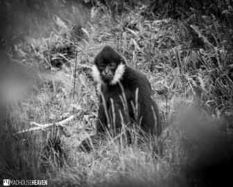 Safaripark Beekse Bergen - 0344