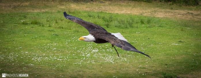 Safaripark Beekse Bergen - 0124