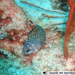 Reeffish vol1.01 (6)
