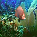 Reeffish vol1.01 (58)