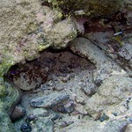 Reeffish vol1.01 (17)