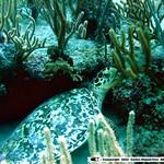 Reeffish vol1.01 (5)