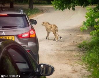 Safaripark Beekse Bergen - 0051