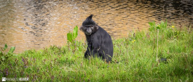 Safaripark Beekse Bergen - 0196