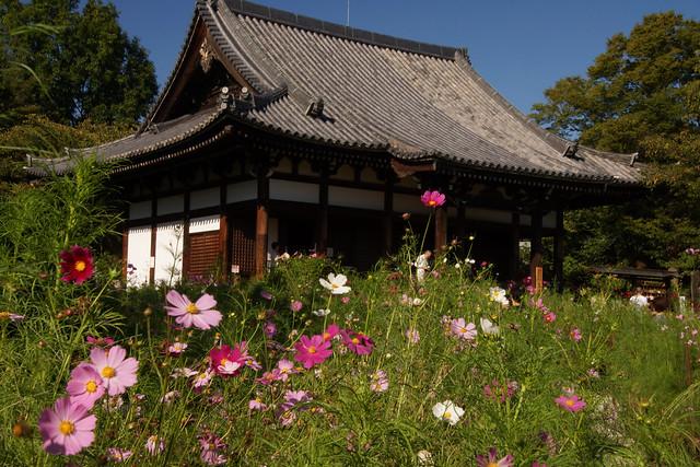 般若寺 / Hannya-ji Temple