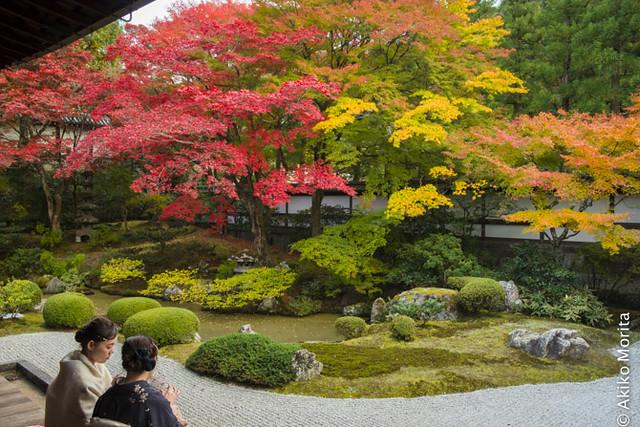 Kyoto, Japan - Admiring Autumn Garden with Kimono at Sennyu-ji Temple