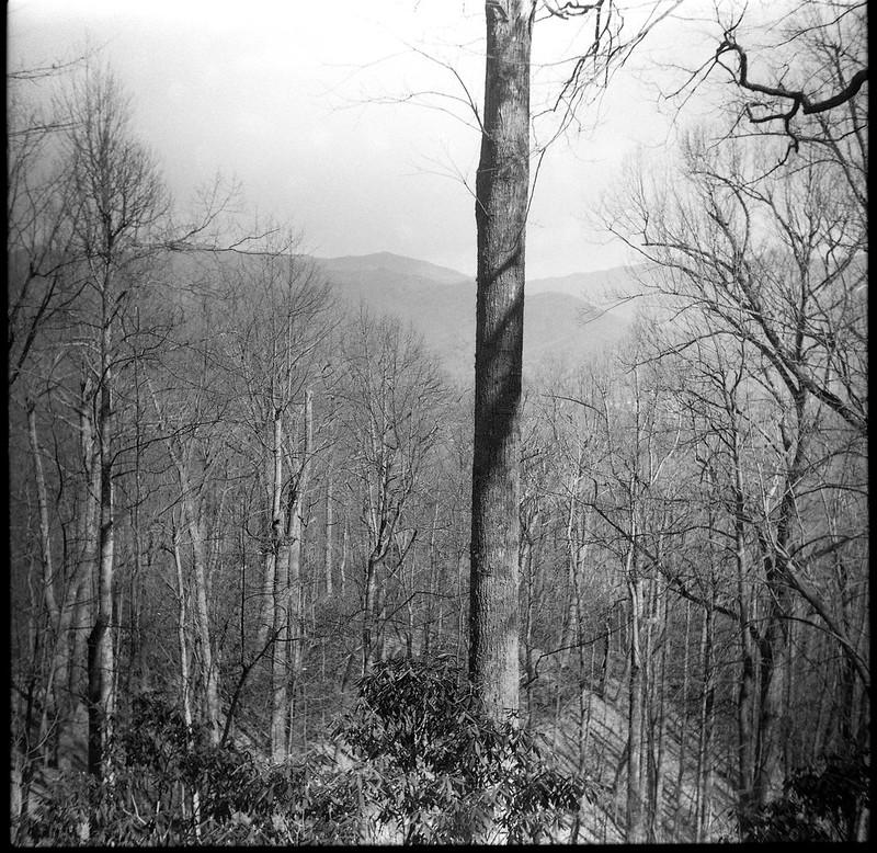 tree, forest, long range mountain vista, Black Mountain, NC, Zeiss Nettar 75mm f-4.5, Artista 400.Edu, Kodak TMax Developer, early March 2017
