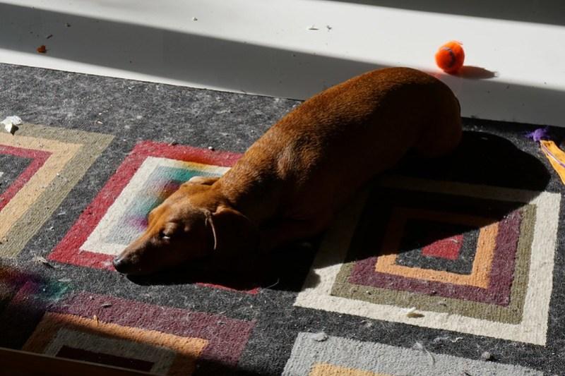 My dog Jasper