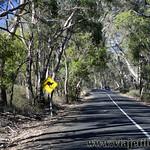 Viajefilos en Australia. Adelaida 35