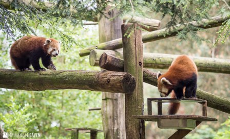 Safaripark Beekse Bergen - 0391