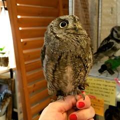 Owl Cafe Tokyo 2015