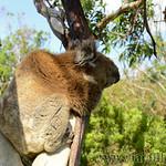 Viajefilos en Australia. GOR  083