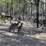 Viajefilos en Australia. Adelaida 43