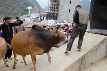 Market Meo Vac