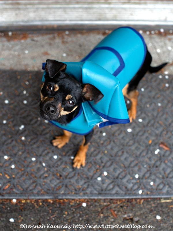 Handmade Dog Raincoat