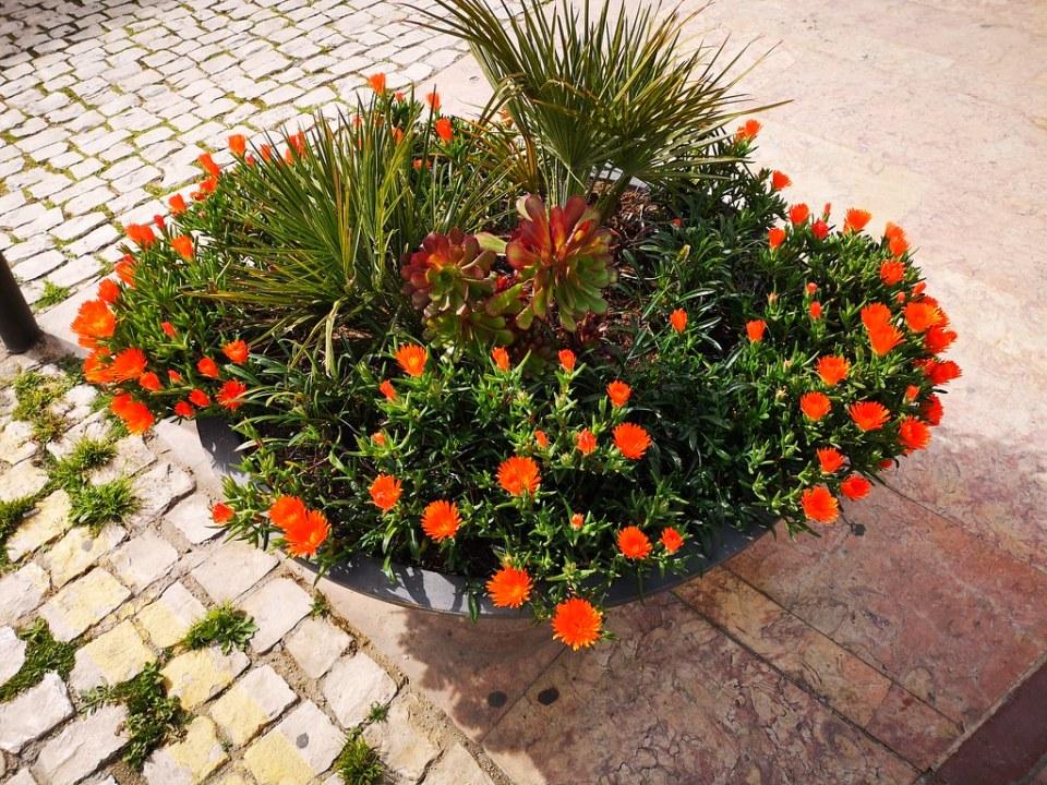 Albufeira flores en la calle Algarve Portugal