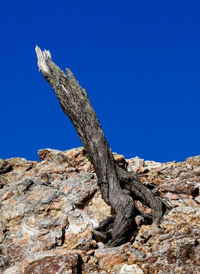 Stump #marineexplorer