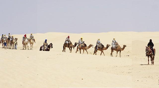 4988 Pilgrims will soon travel from Makkah to Madinah on camel backs 01