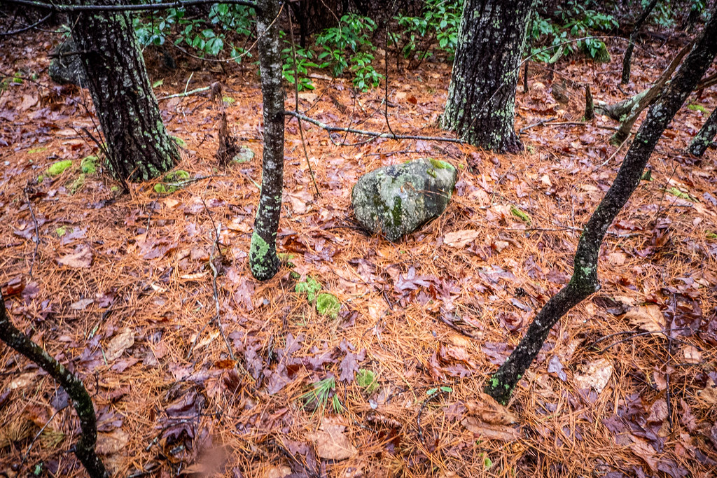 Tall Pines Preserve and South Saluda Church Cemetery-33
