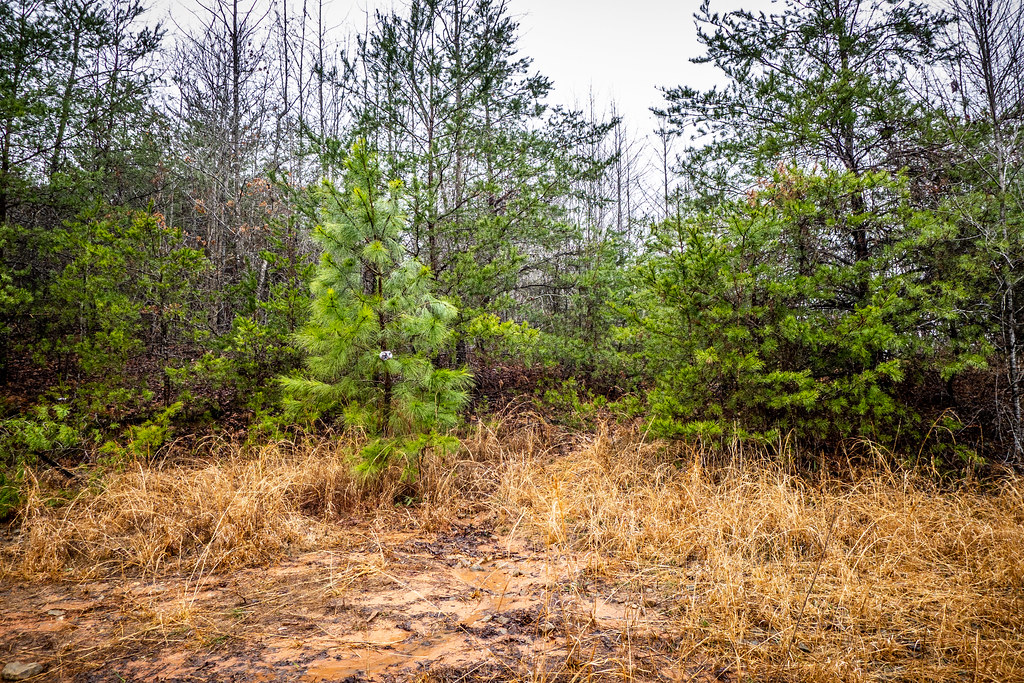 Tall Pines Preserve and South Saluda Church Cemetery-24