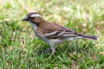 ....leuke vogeltjes in de tuin....