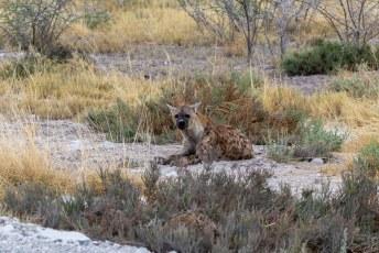 Vervolgens hadden we geluk dat één van de weinig hyenas gewoon langs de kant van de weg lag te luieren.