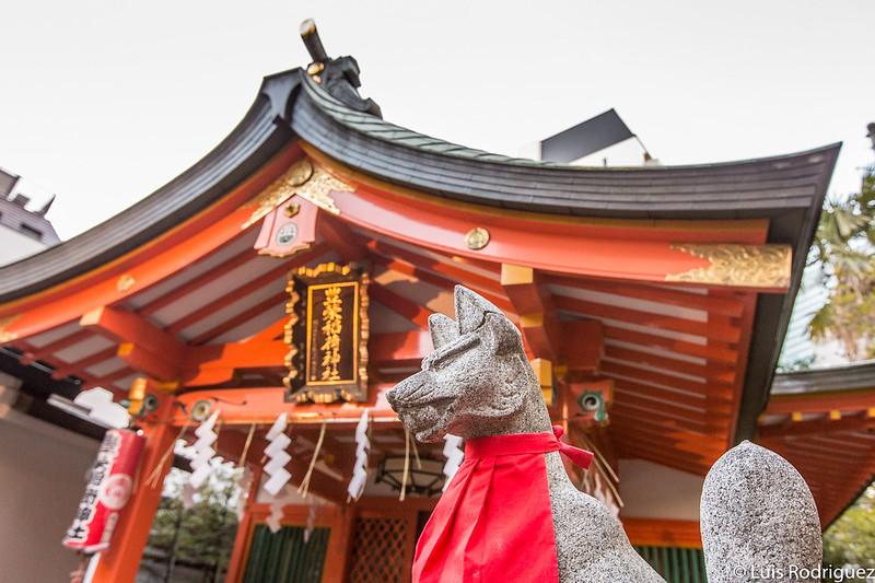 Zorros delante del salón principal del santuario Toyosaka Inari