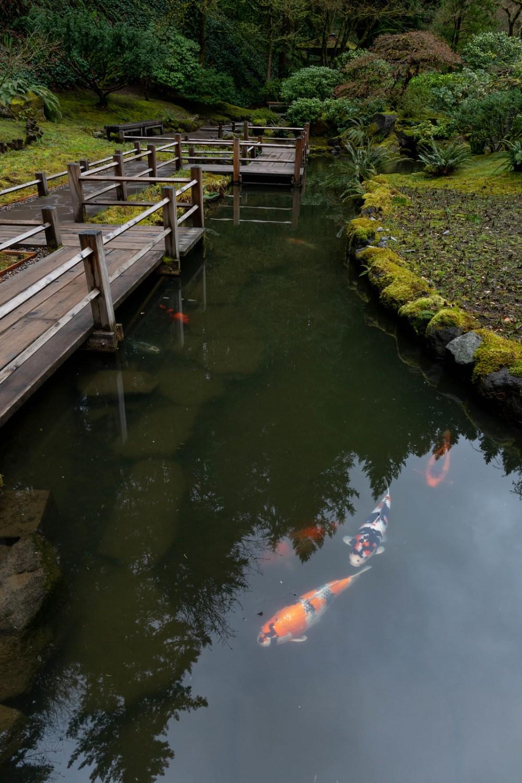 04.03. Portland Japanese Garden