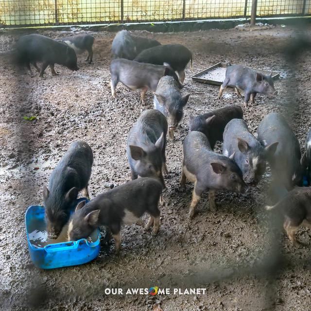 Yoki's Farm 2019-89.jpg