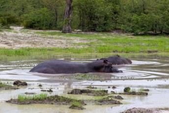 Iets verderop waren een paar hippos aan het badderen.