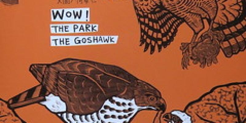 《哇!公園有鷹》看看鳳頭蒼鷹住在都市裡
