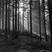 Skovstemning
