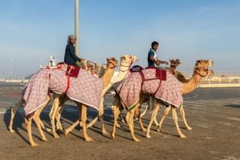 De volgende dag had we wat ons betreft de nummer 1 van die top 15 te pakken. De kamelenraces.