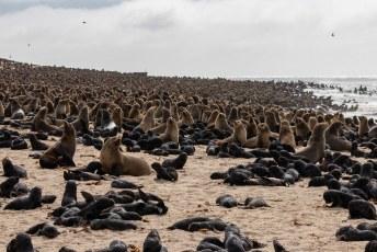 Totdat we vlak voor Henties Baai bij deze zeeleeuwen kolonie kwamen.