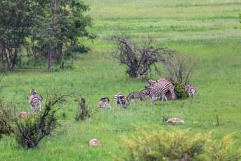 Bij een volgende uitkijktoren hadden we meer geluk, eindelijk wat wildlife.