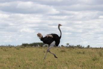 Op weg naar de uitgang kwamen we deze struisvogel tegen......