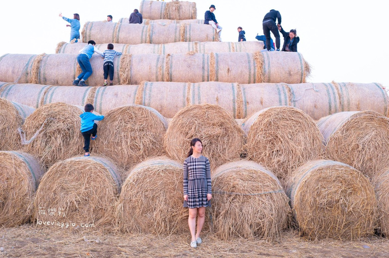 稻草捲,虎尾稻草捲,金億陽洋菇農場,雲林景點 @薇樂莉 Love Viaggio | 旅行.生活.攝影