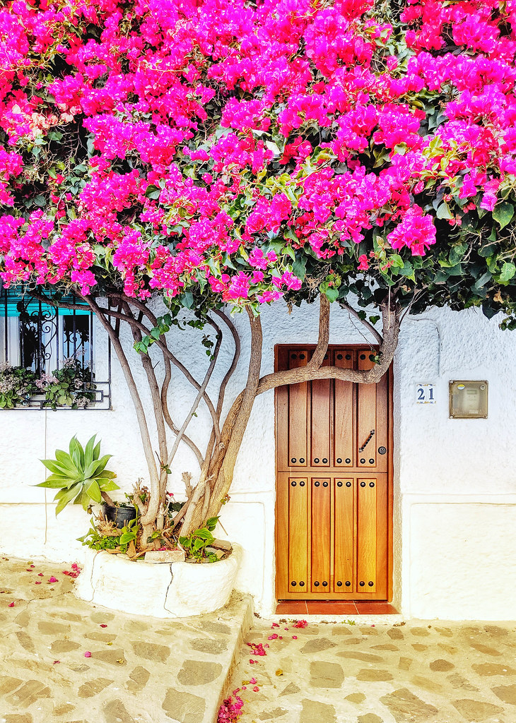 A tree with pink flowers taking over the facade of a house in Salobrena