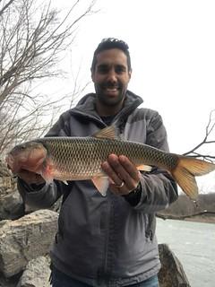 State record fallfish