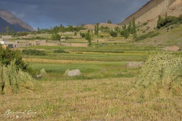 Champs en terrasses, Zood Khun, Vallée Chapursan © Bernard Grua