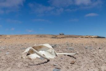Het park dankt zijn naam aan de walvisbeenderen die er werden aangegetroffen. Maar ik betwijfel of dit vroeger een walvis was.