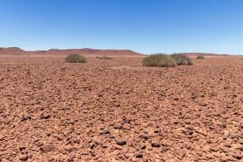 In de woestijn groeit weinig, en wat er groeit is vaak giftig. Maar neushoorns kunnen deze planten eten zonder ziek te worden.