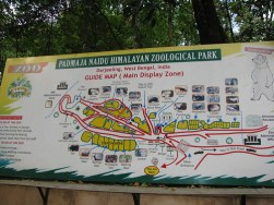 Padmaja Naidu Himalayan Zoological Park photo