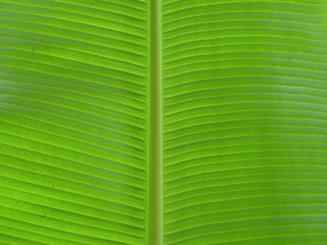Banana Leaf at Agua Azul