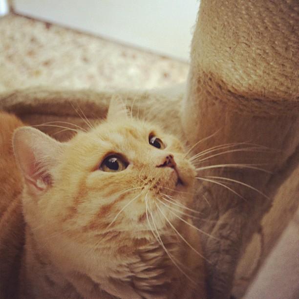 Chronos gordos wapos #cat #chronos #gato #neko #猫