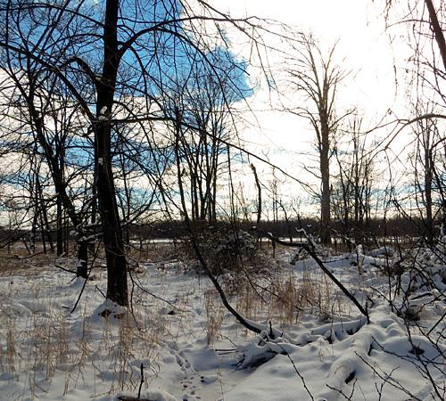 Kensington woods